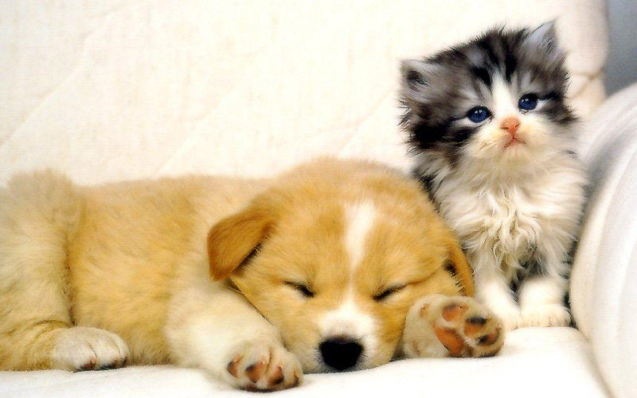Cute Cats & Dogs New Tab for Google Chrome